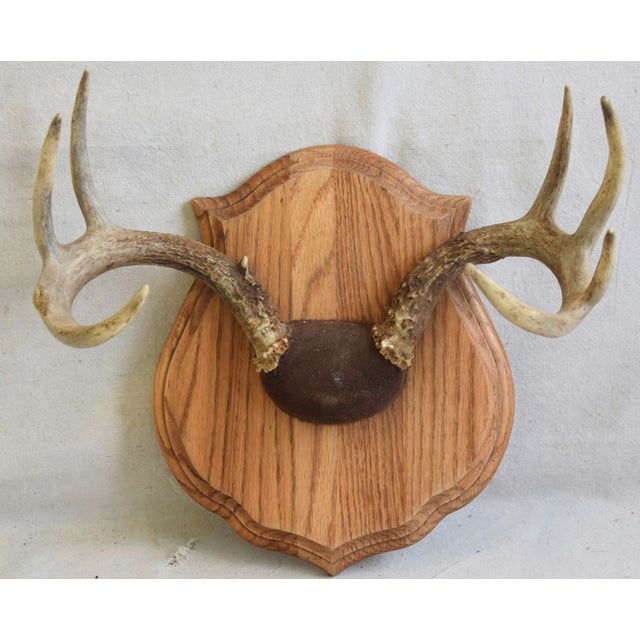Wood Vintage Mounted Trophy Antlers on Wood Plaque For Sale - Image 7 of 8