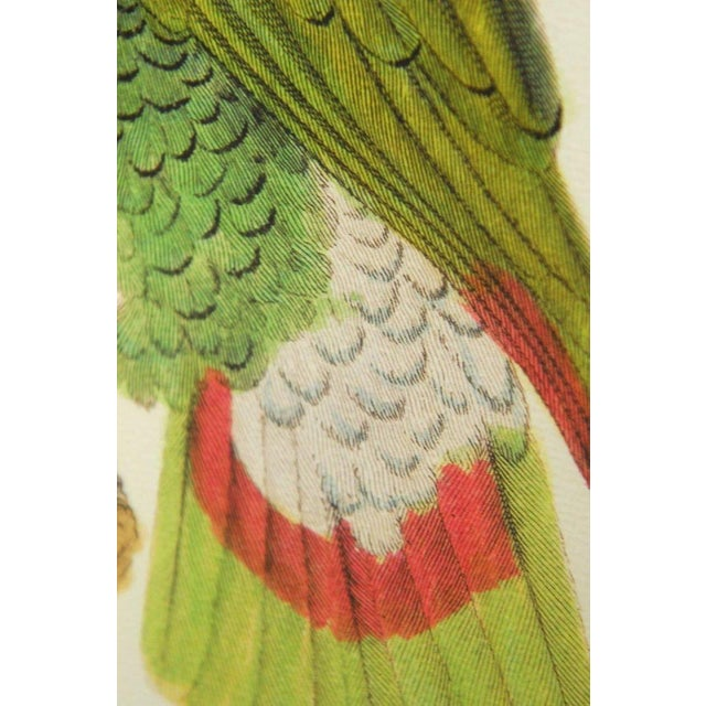 English Hand-Colored Ornithological Print of a Parrot For Sale - Image 10 of 13