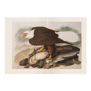 1960s White-Headed Eagle by Audubon, XL Vintage Cottage Style Print For Sale