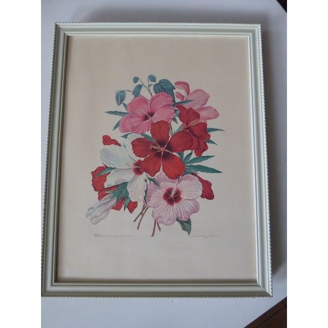 Vintage Athos Menaboni Hibiscus Botanical Print - Image 2 of 9