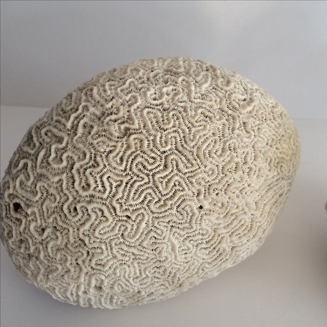 Boho Chic Brain Coral Specimens - A Pair For Sale - Image 3 of 6