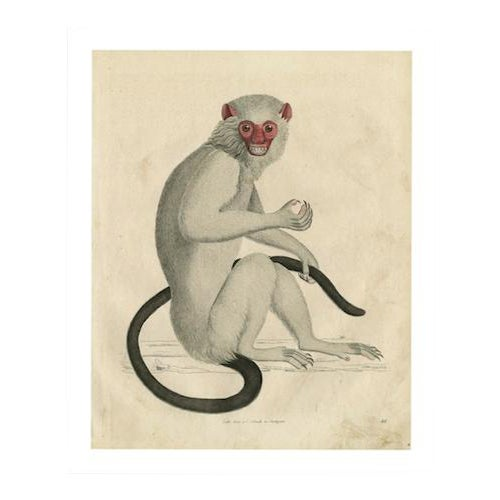 Vintage Monkey Archival Print - Image 1 of 5