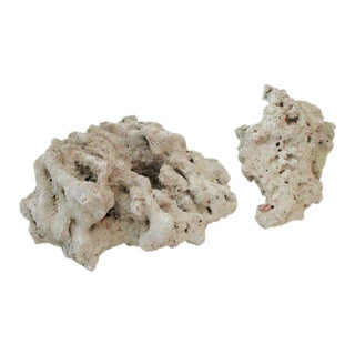 Abstract Organic Natural Coral Specimen- Set of 2