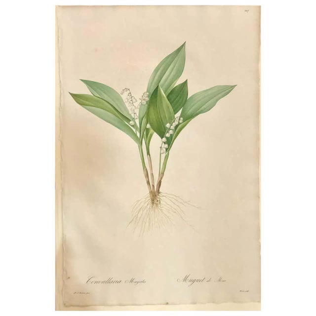 Convallaria Majalis Print Hand Colored Engraving Signed p.j. Redoute For Sale - Image 13 of 13