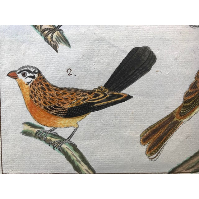 Antique Original Watercolor Birds Ornithological Study 18th Century For Sale In New York - Image 6 of 7