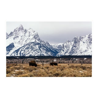 """Buffalo in the Tetons"" Original Framed Photograph"