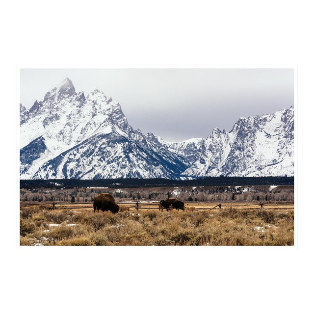 """Buffalo in the Tetons"" Original Framed Photograph For Sale"