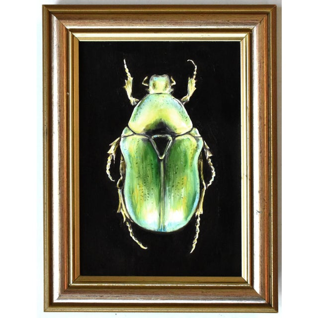 A contemporary oil painting of a yellow-green beetle in traditional taxidermy style, in a gold gilt beveled frame.