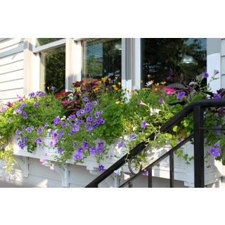 Window Flowers Photograph by Josh Moulton For Sale
