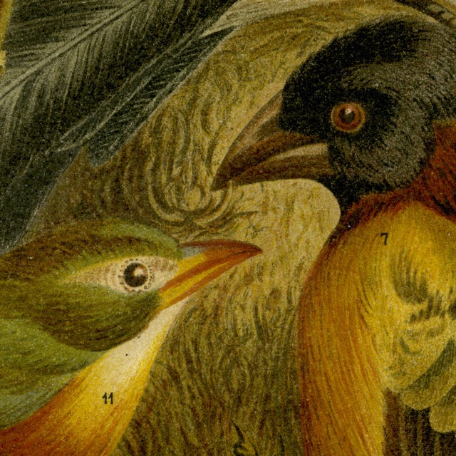 Antique 'Red Birds' Archival Print - Image 4 of 4