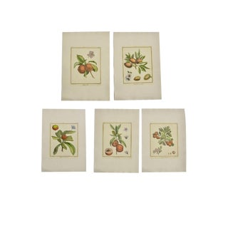 Vintage Mid-Century Basseporte Aubriet Fruit Botanical Hand-Colored Engravings - Set of 5 For Sale