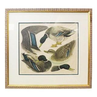 Japanese Mallards Print in Gilt Frame For Sale
