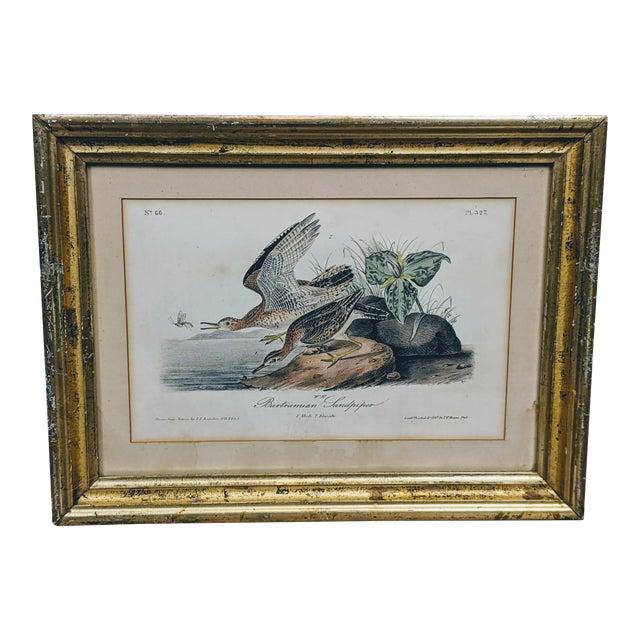 1940s John James Audubon Hand-Colored Bartramian Sandpiper Lithograph by Jt Bowen For Sale