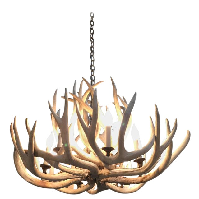 Antique Bleached Antler Chandelier For Sale