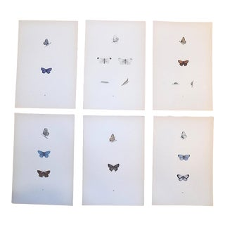 Antique 19th C. Lithographs-Butterflies -Period Hand Color - Set of 6 For Sale
