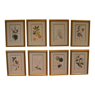 Limited Edition Botanical Prints in Gold Frames- Set of 8 For Sale
