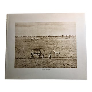 1920s Vintage African Safari Eland Rotogravure Photographic Print For Sale