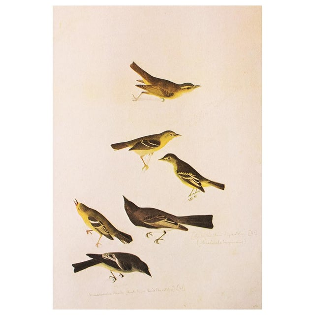 Birds of America by John James Audubon, 1966 Vintage Print For Sale In Dallas - Image 6 of 8
