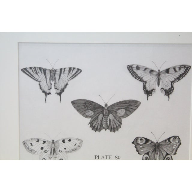 Drawing/Sketching Materials Black and White Butterflies Sketch For Sale - Image 7 of 10