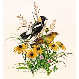 "1970s Original Signed Limited Edition Print by Roger Tory Peterson, ""Bobolink"" For Sale"