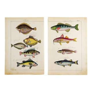 Colorful Fish Woodcut Prints - a Pair For Sale