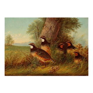 A Covey of Quail By Howard Hill For Sale