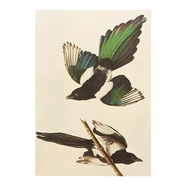 "1966 ""American Magpie"" Lithograph by John James Audubon For Sale"