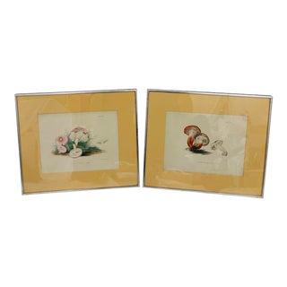 Antique Mushroom Prints - a Pair For Sale