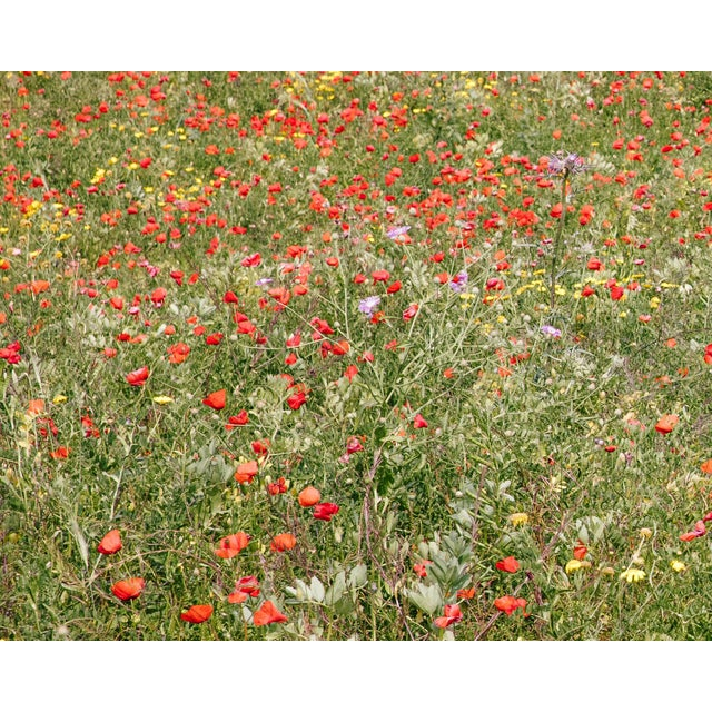 Neverending flowers in Noto, Sicily, 2019. Color Photograph by Augustus Butera. Color print on pulp-, acid-, and lignin-...