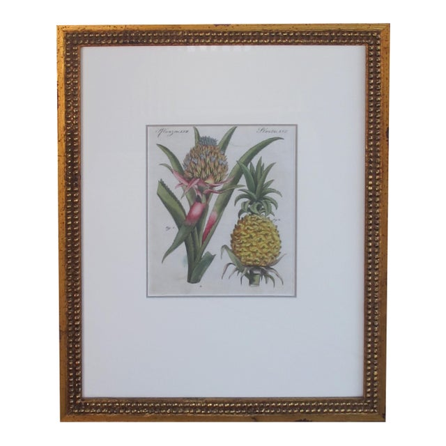 Mid 18th Century A Well-Rendered French 18th Century Hand-Colored Pineapple Engraving For Sale - Image 5 of 5