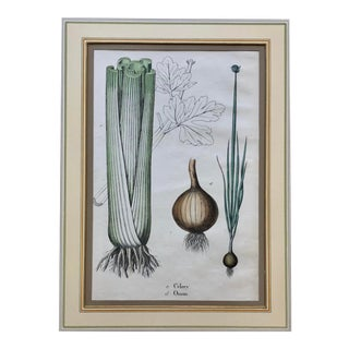 1863 Hand Tinted Celery Print For Sale