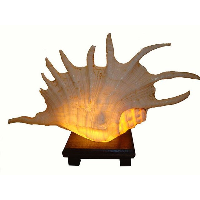 Large Spiny Shell Lamp - Image 2 of 6