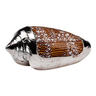 Partially Silvered Sea Shell Conus Sebastian For Sale