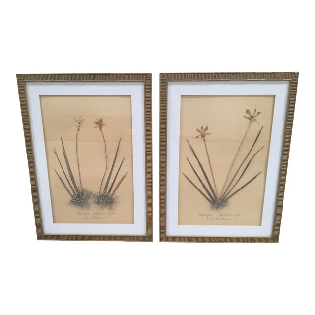 Faux Bamboo Framed Pressed Orchids - A Pair - Image 1 of 7