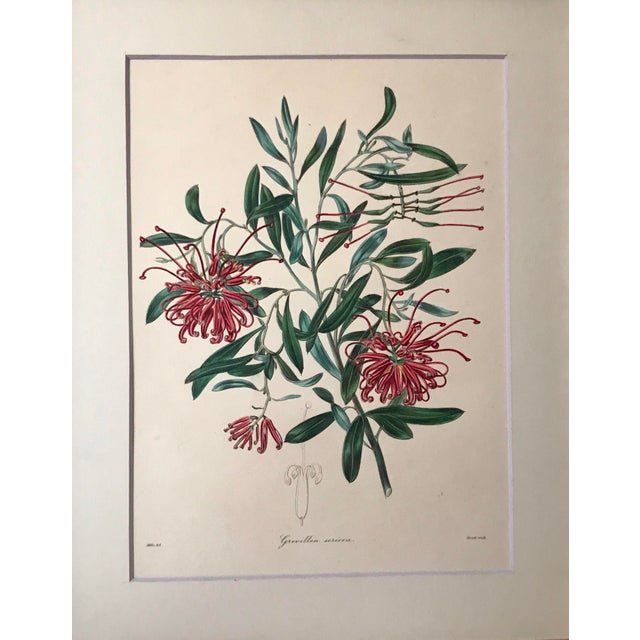 Original antique 19th century floral botanical print hand colored etching. Presented archival matted and framed.