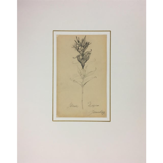 Delicate pencil sketch of a flower by 19th C. German artist, E. Wollenweber. The piece features notes in pencil by the...