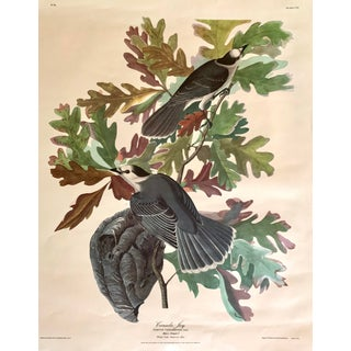 1950s Vintage Foliage & Bird Print For Sale
