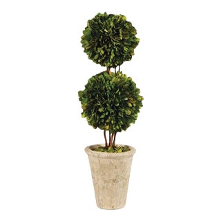 Boxwood Double Ball Topiary For Sale