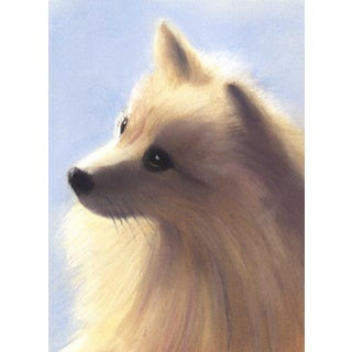 "Linda Ruiz Lozito ""Cosmos"" Pomeranian Pastel Drawing For Sale"