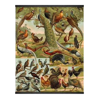 Antique 'World Birds' Wall Hanging