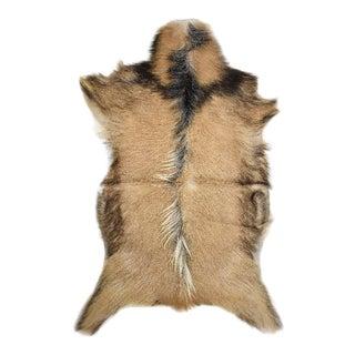 "Contemporary Handmade Short Hair Goat Skin Pelt - 2'0"" X 3'1"""