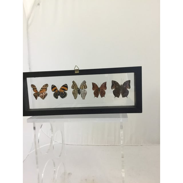 A beautiful collection of butterfly's mounted in a modern black shadow box frame so you can see the front and back of the...