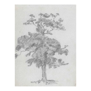1920s Drawing of a Tree by Harnett For Sale