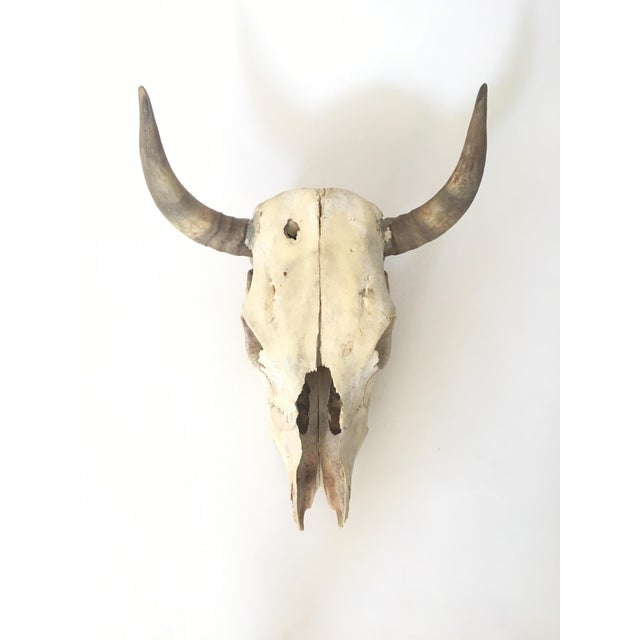 Steer Skull and Horns Wall Mount - Image 2 of 4