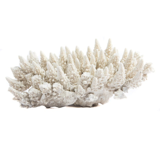 LARGE WHITE CORAL SPECIMEN - Image 2 of 10