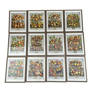 1960s Prints of Rob't Furber's 1732 Collection of Botanical Illustrations- Set of 12 For Sale