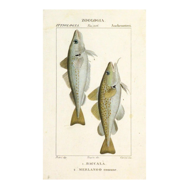 Freshwater Fish Engraving Print, C. 1830 For Sale