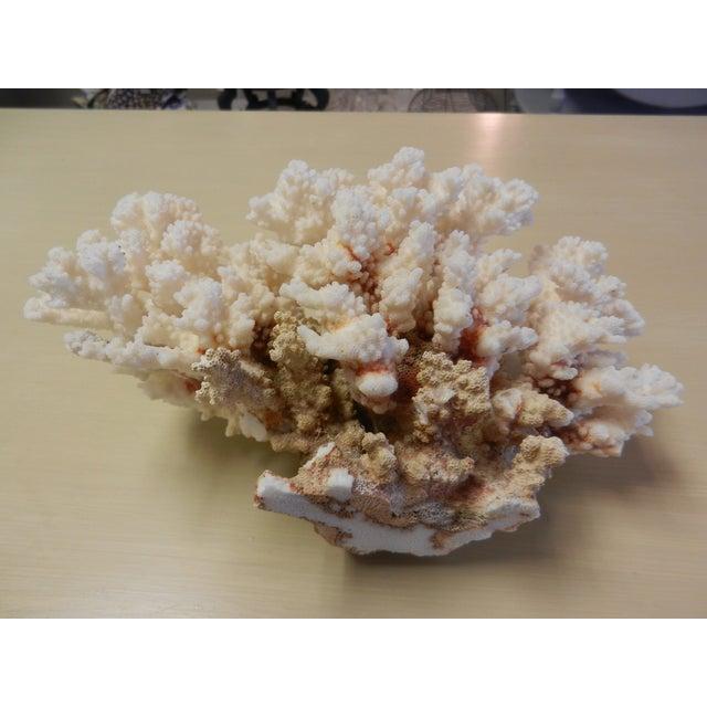 Brown Stem Coral Fragment - Image 4 of 4