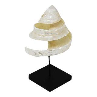 Tessalata Cream Pine Natural Shell Sculpture For Sale