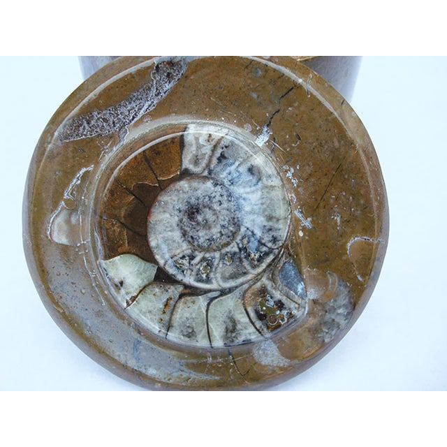 Ammonite and Orthocerus Fossil Carved Box - Image 4 of 5